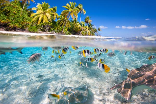 De zee met zeedieren bij de Stille Oceaan